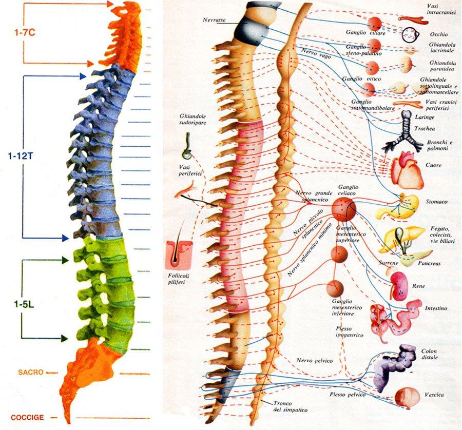 osteopatia-torino